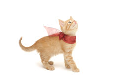 Ginger kitten with red bow isolated on white Royalty Free Stock Photo