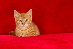 Ginger kitten, red surroundings Stock Images