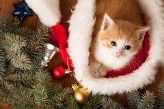 Ginger kitten in santa hat against the background of a Christmas Stock Images