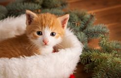 Ginger kitten in santa hat against the background of a Christmas Stock Image