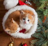 Ginger kitten in santa hat against the background of a Christmas. Tree royalty free stock image