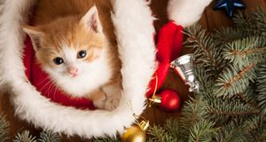 Ginger kitten in santa hat against the background of a Christmas. Tree stock photo