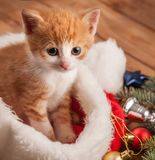 Ginger kitten in santa hat against the background of a Christmas. Tree royalty free stock photos