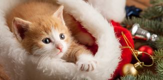 Ginger kitten in santa hat against the background of a Christmas. Tree stock image