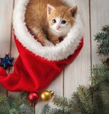 Ginger kitten in santa hat against the background of a Christmas. Tree stock images