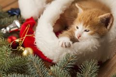 Ginger kitten in santa hat against the background of a Christmas. Tree royalty free stock photography