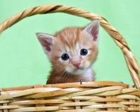 Ginger kitten sitting in a basket Royalty Free Stock Photo