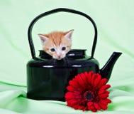 Ginger kitten sitting in black kettle Royalty Free Stock Image
