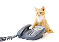 Ginger Kitten Sitting With Its Paw On A Phone. A ginger kitten sitting behind a business phone with its paw by the handpiece, staring into the distance. The stock image