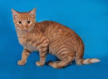 Ginger kitten sneaks on blue. Background Stock Image