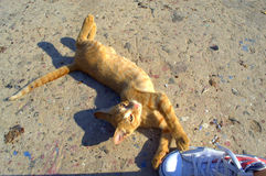 Ginger kitten sprawling on the sun Royalty Free Stock Images