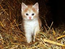 Ginger Kitten On Straw immagini stock