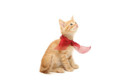 Ginger kitten tied in red bow isolated on white Stock Images