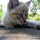 Ginger kitten on wooden table Stock Image