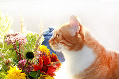Ginger kitty Royalty Free Stock Photography
