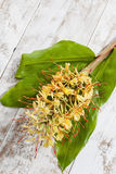 Ginger lily, Hedychium spicatum, fragrant plant Stock Photography