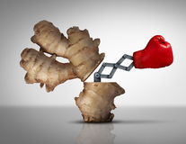 Ginger Medicine. Concept as a natural herbal medicinal root opened with a boxing glove icon emerging with a 3D illustration mechanism to fight off disease and Stock Images