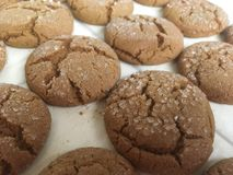 Ginger Molasses Cookies arkivbilder