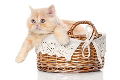 Ginger Persian cat in a basket Royalty Free Stock Photos