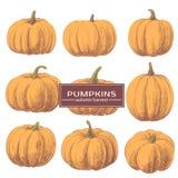 Ginger Pumpkins auf einem weißen Hintergrund Stockfotos