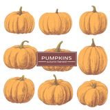 Ginger Pumpkins on a White Background. Beautiful pumpkins for holiday on a white background Stock Photos