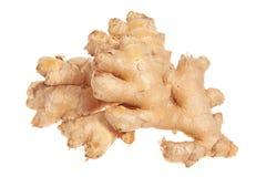 Ginger Rhizome Royaltyfri Foto