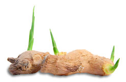 Ginger root. With sprouts on white Royalty Free Stock Photos