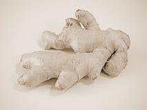 Ginger Root i Sepiasignaler Royaltyfri Fotografi