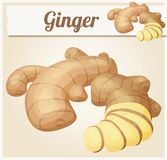 Ginger root illustration. Cartoon vector icon Royalty Free Stock Images