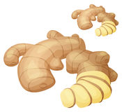 Ginger root illustration. Cartoon vector icon on white background royalty free illustration