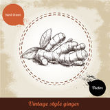 Ginger root illustration. Vintage retro background with hand drawn sketch ginger root. Stock Images