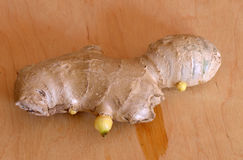 The ginger root Royalty Free Stock Images