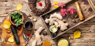 Ginger root for tea. Ginger root and natural medical ingredients for medicinal tea and tinctures stock images