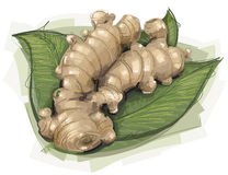 Ginger Root peu précis Image stock