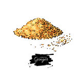 Ginger root powder vector hand drawn illustration. Artistic styl Stock Images