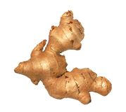 Ginger root / rhizome Royalty Free Stock Photos