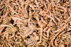 Ginger root for sale in Cambodian market Royalty Free Stock Images