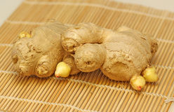 Ginger Roots Stock Images