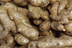 Ginger Roots Fotografia Stock