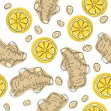Ginger roots with lemon. Hand draw ingredient for warming tea. Whole and sliced ginger roots with lemon. Vector seamless pattern. Ginger roots with lemon. Hand royalty free illustration