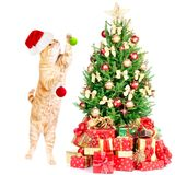 Ginger santa cat and Christmas tree. Royalty Free Stock Image