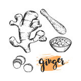 Ginger sketch illustration Royalty Free Stock Photos