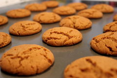 Ginger Snap Cookies Stockfoto