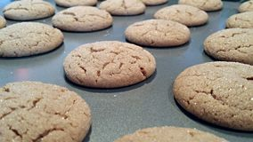 Ginger Snap Cookies royalty-vrije stock foto's