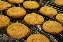 Ginger Snap Cookies Stock Photos