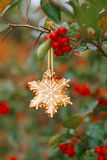 Ginger snowflake cookie hanging on a tree with red berries Stock Photos