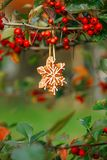 Ginger snowflake cookie hanging on a tree with red berries Stock Image