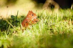 Ginger squirrel with nut Stock Photo