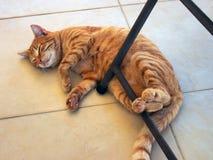 Ginger Tabby Ally Cat muy gordo y feliz fotografía de archivo libre de regalías