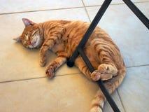 Ginger Tabby Ally Cat muy gordo y feliz imagenes de archivo